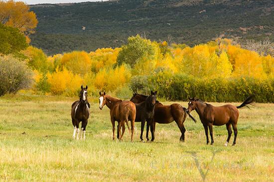 33 Horses 2 550