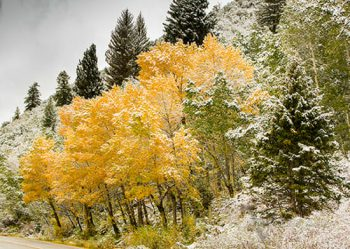 Fall Color In  Big Cottonwood Canyon