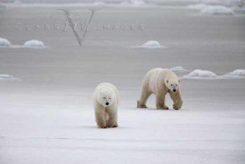 Arctic Stroll