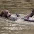 Bear Bath 550