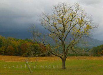 Cades Cove Yellow Tree