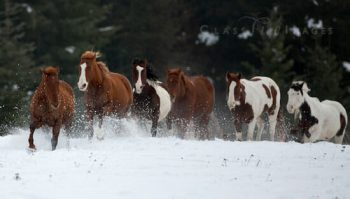 Charging Through The Snow