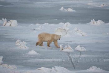 Crossing The Polar Ice