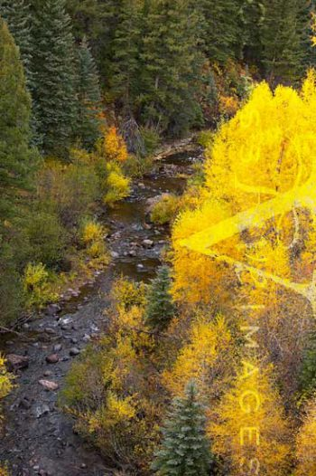 Fall Color In Cumbres Canyon