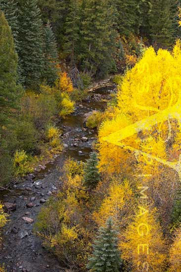 Fall Color In Cumbres Canyo