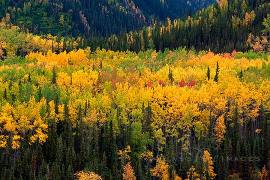 Fall Color In Denali 550