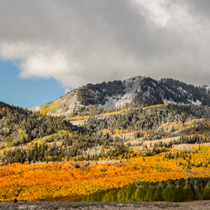 Fall Color In Guardsman Pass