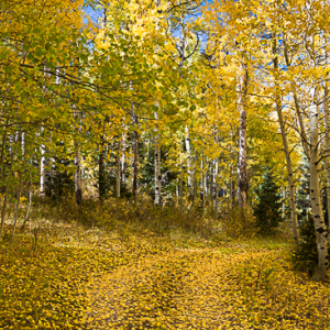 Fall Color In Nebo Canyon