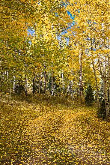 Fall Color In Nebo Canyon 550
