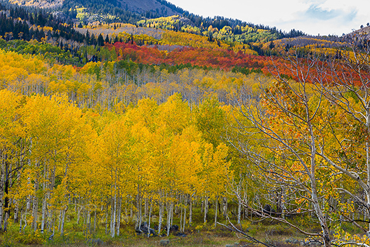 Fall Color In Park City 550