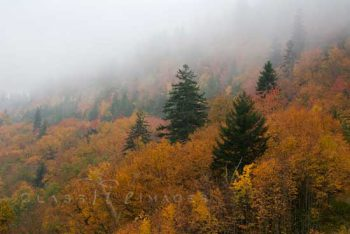 Fall Color In Fog