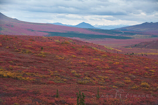 Fall Color In The Tundra 550