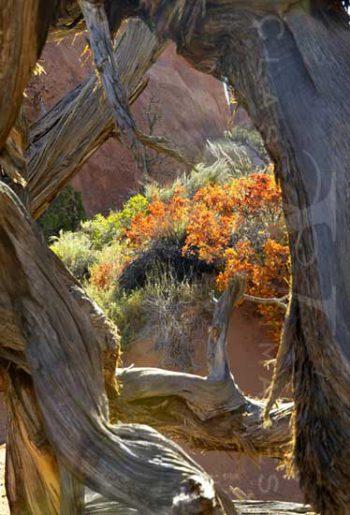 Fall Color In Devil's Garden