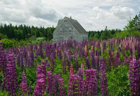 Flower House 550