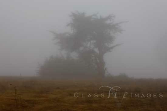 Mendocino Coast In Fog 550