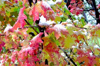 Frozen Fall Color