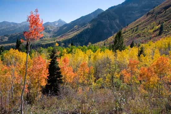 Sundance Fall Color 550