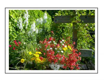 Wheelbarrow In Bloom