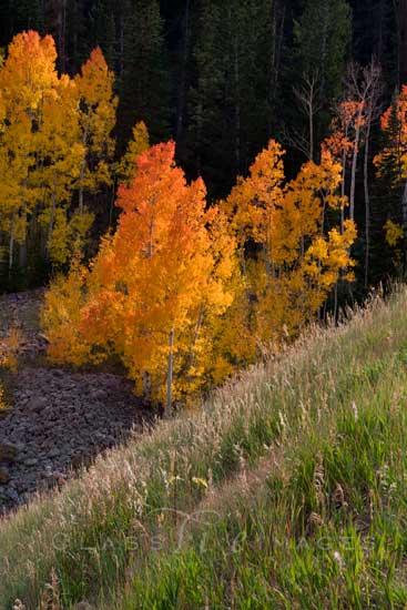 Wolf Creek Canyon 3 550