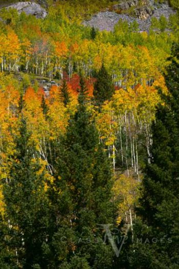 Fall Color In Animas River Canyon
