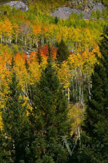Fall Color In Animas River Canyon
