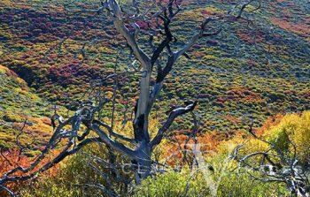 Mesa Verde Fall Color