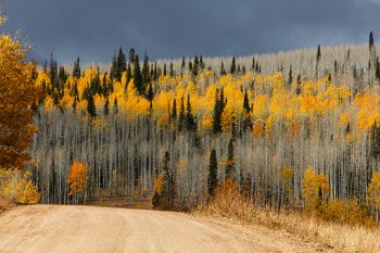 Utah Fall Color