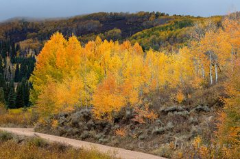Fall Color At Strawberry Reservoir
