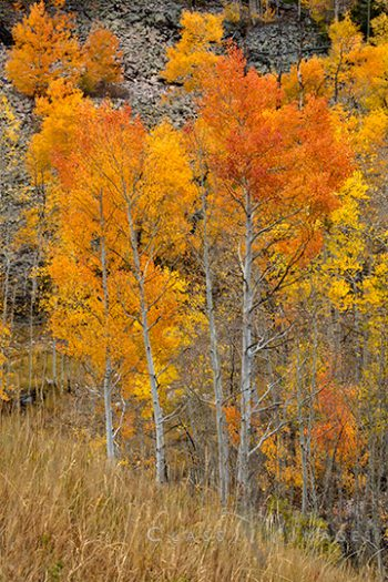 Fall Color In Wolf Creek Canyon