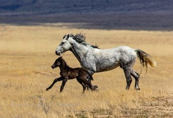 Wild Mustang 5