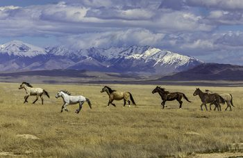 Wild Mustang 6