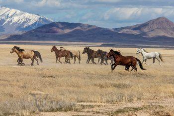 Wild Mustang 7