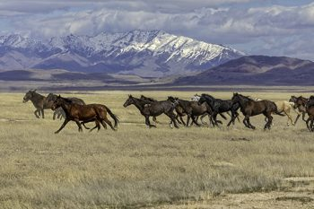 Wild Mustang 9